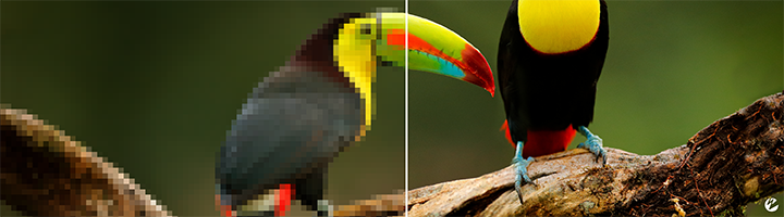 A picture of two toucans with half the image showing pixelation from lossy compression and the other half showing a pristine image.